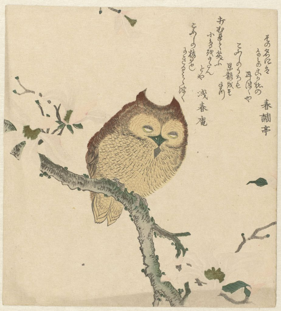 Sleepy Japanese owl in magnolia tree