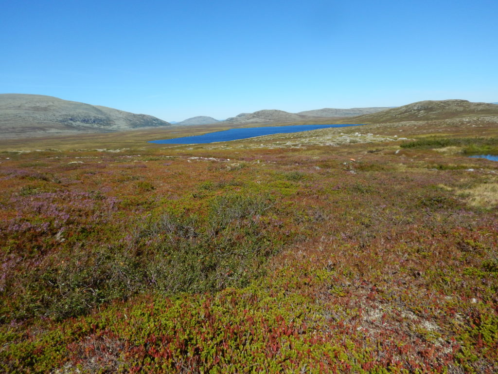 Higher grounds, the plain in the mountain area near Grövelsjon, with heather, small bushes and a lake.