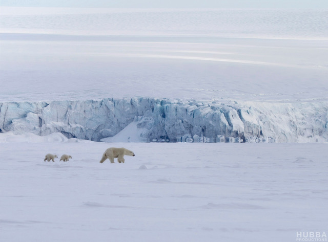 Polar bear with two cubs on Svalbard. Image credit Fredrik Granath and Melissa Schaefer.